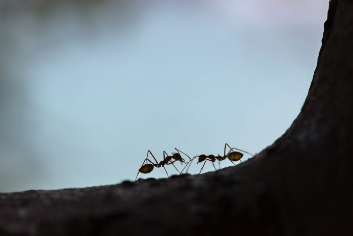 How to Solve an Ant Problem