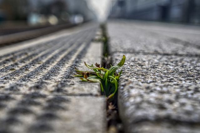 How to Kill Weeds Between Pavers – How do you stop weeds from growing?